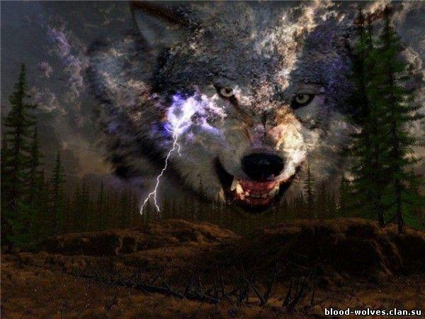 Картинки волков на аву